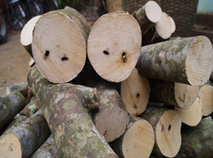 An overview on Trade and Distribution of Agar wood in North-East India